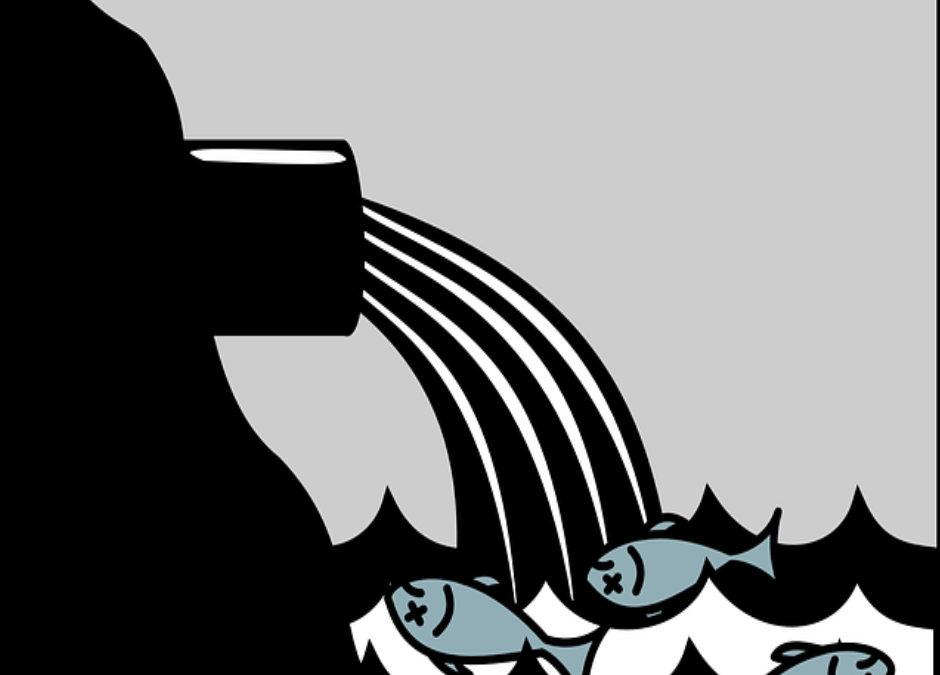 Quelle poisson peut-on manger sans le risque d'attraper un cancer ?